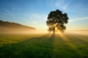 manfaat-sinar-matahari-pagi-untuk-tubuh